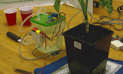 Automated Plant Watering With Arduino